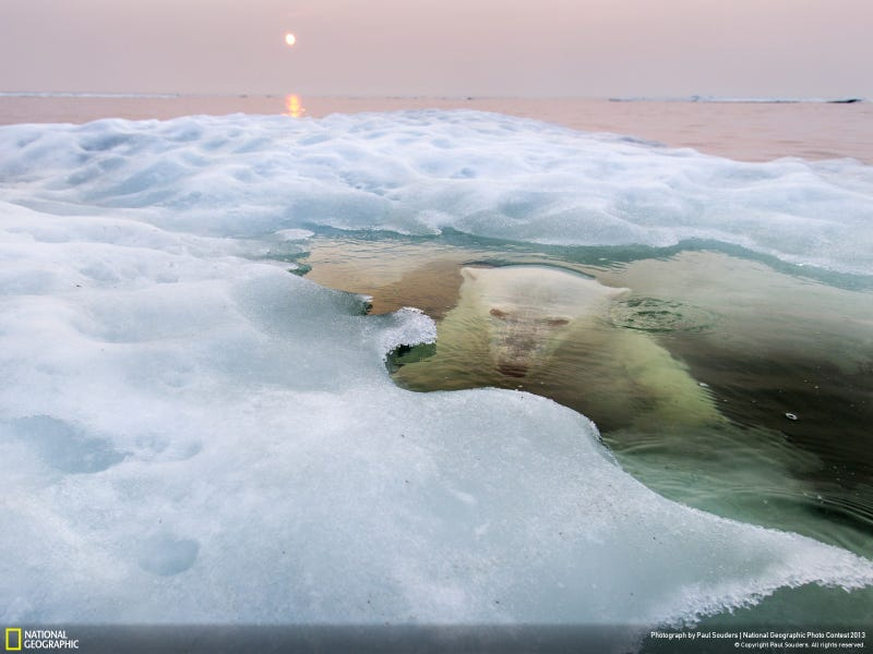 These are National Geographic's favorite images of the year