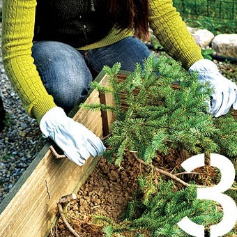 Reuse Your Christmas Tree as a Garden Insulator