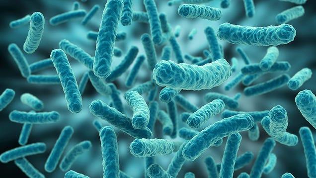 Want Clearer Skin? Start Embracing Bacteria.
