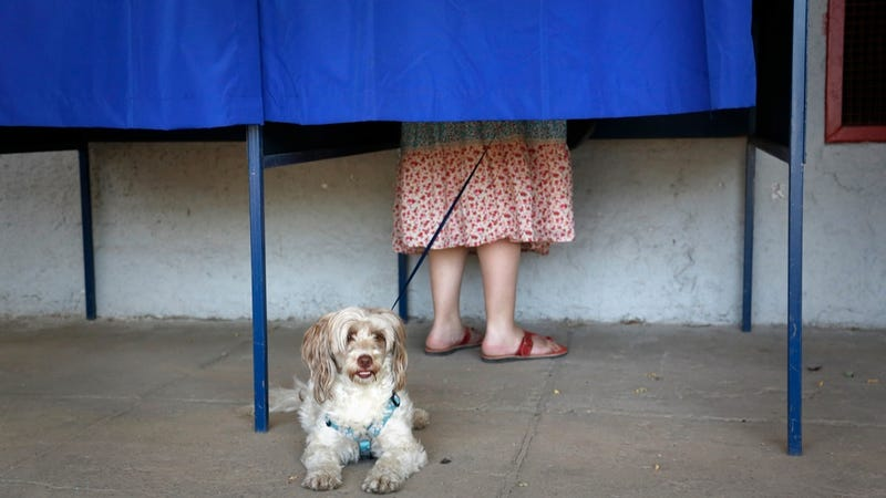 Chilean Dog Patiently Waits for the Democratic Process to End