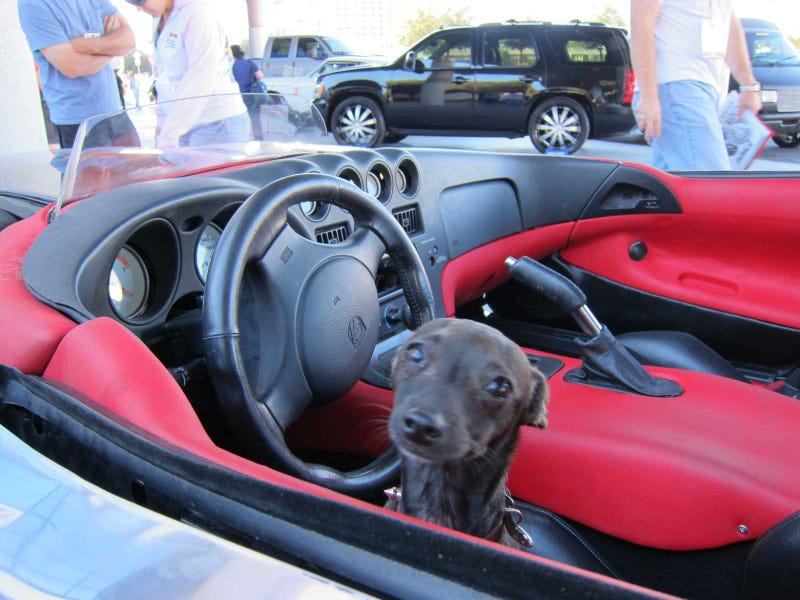 Dodge Viper Speedster, Canine Passenger Separated From Owners At SEMA