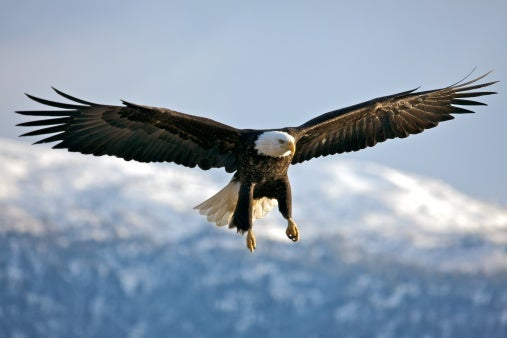 A Dutch Company Is Training 'Low-Tech' Eagles to Fight Drones