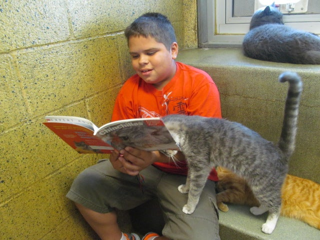 Kitties. Books. Kitties With Books, and Also Children.