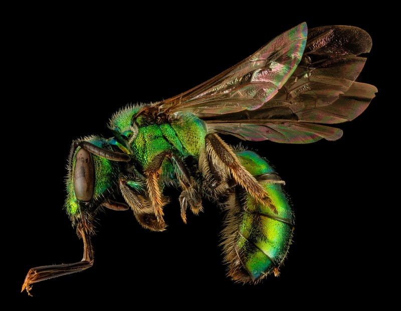 Close-Up Bee Portraits Are A Glimpse Into A Gorgeously Weird World