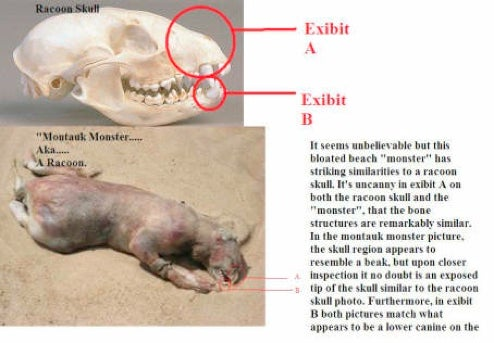 Scientist Plea From Montauk Monster Finders