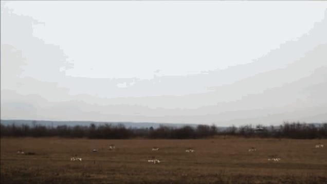 Magyar drónrajoktól retteghet a világ