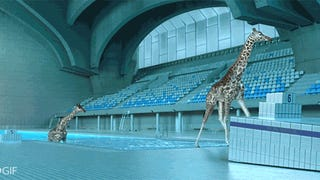 Watching realistic CGI giraffes dive into a pool is pure ridiculous fun