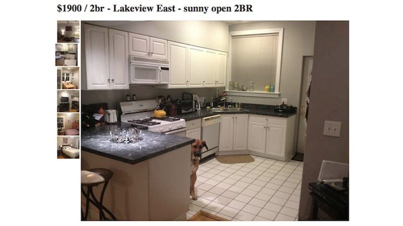 World's Raddest Dog Adorably Photobombs Craigslist Ad