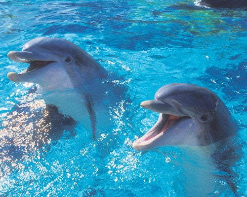 Marine Biologists Argue Dolphins Deserve Equal Rights