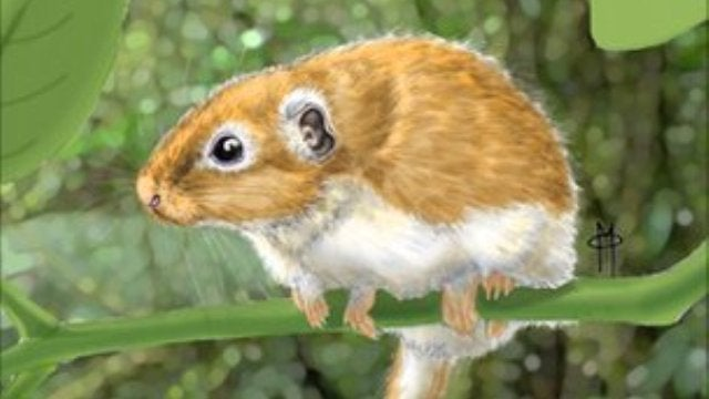 The ancestor of all American rodents really came from Africa