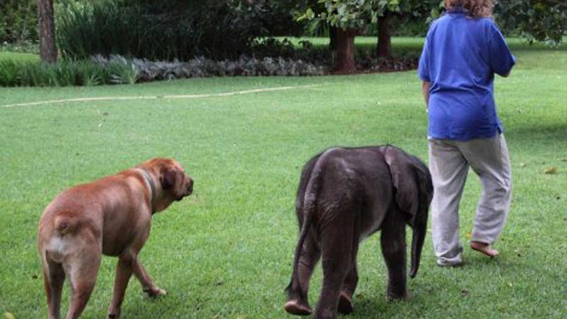 Orphaned Baby Elephant Teaches Us How to Love