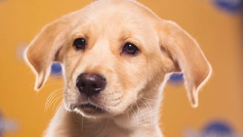 The Most Shocking Scandals of the 2013 Puppy Bowl