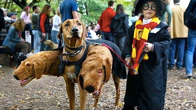 Inarguably the cutest Harry Potter cosplay ever