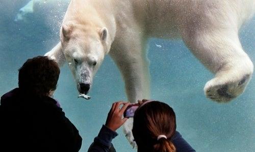 Zoo Lens
