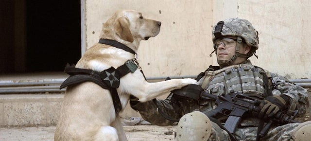 War Dogs In Afghanistan Are Getting Their Own Air-Conditioned Kennels