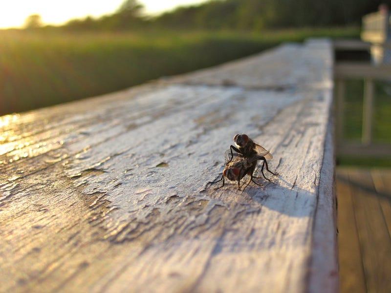 Shooting Challenge: Bugs 3