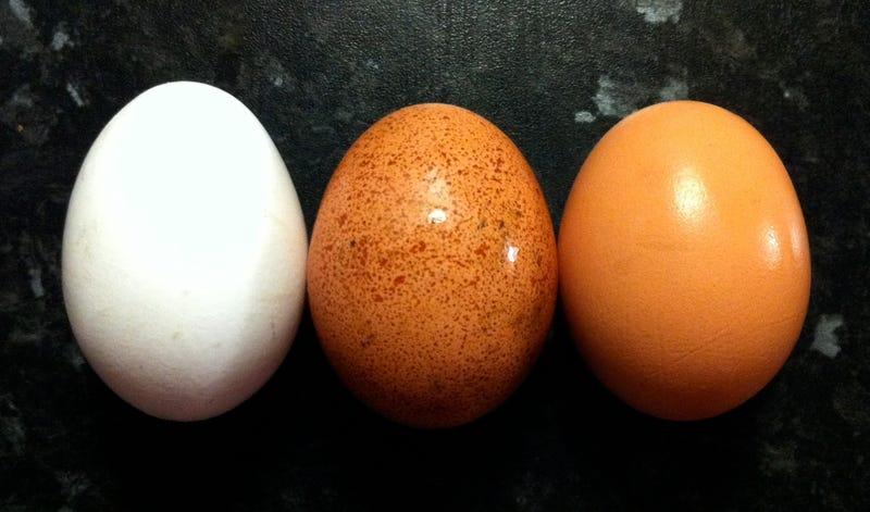 Are Eggshells Edible?