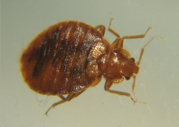 The Bedbug Epidemic Just Gets Worse