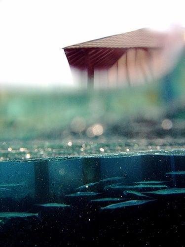 Fetish: I Love Half-Underwater Photos