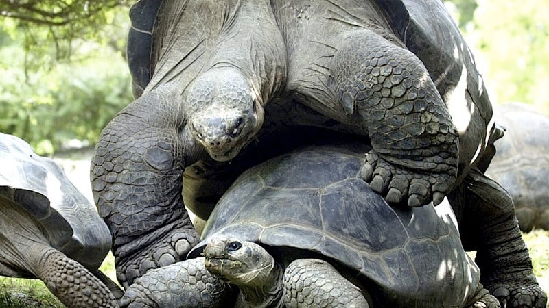 Giant Turtles 'Divorce' After Spending 115 Very Slow Years Together