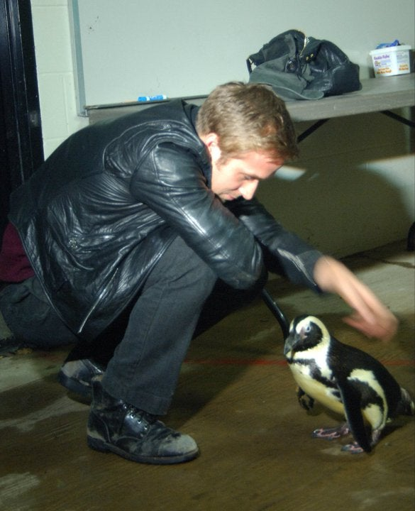 Ryan Gosling Plays With Adorable Animals In Continued Effort To Fuck With Us