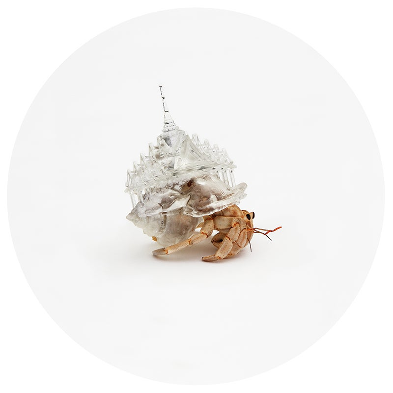 These hermit crabs carry 3D-printed cityscapes on their backs
