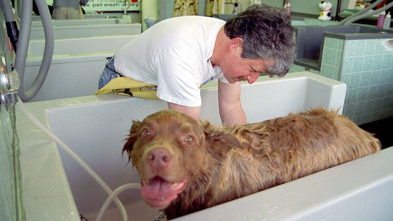 Minimize Shedding by Adding Fabric Softener to Your Dog's Bath