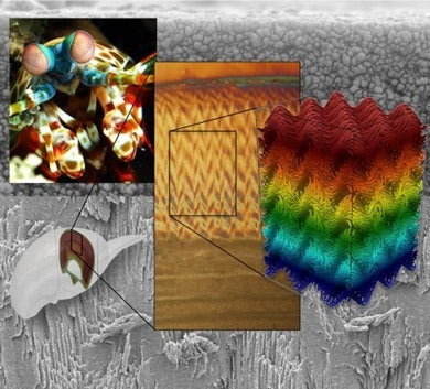 The Mighty Claw of the Mantis Shrimp Inspires Next-Gen Helmets and Body Armor