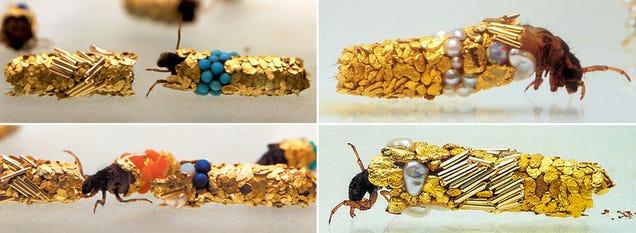 Esses insetos construir Carapaces de Ouro e Pérola