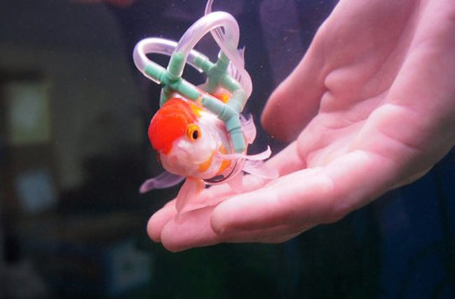 Your Daily Bit of Aaaw: Man Makes Life Vest for Pet Fish.