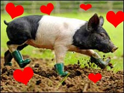 Pig In Boots!