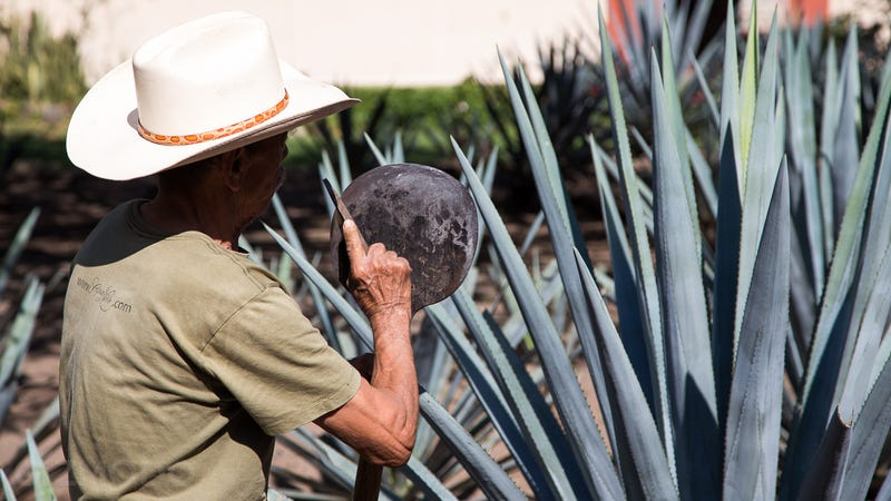 How Tequila Geniuses Made the Best-Tasting Spirit I've Ever Had