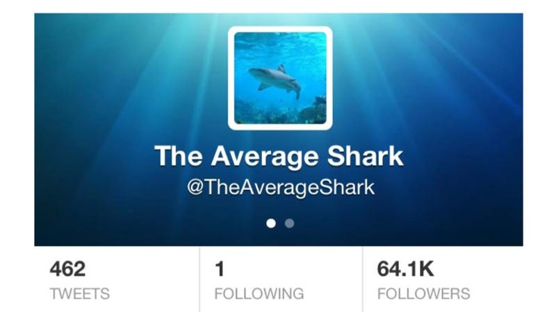 On Twitter, @TheAverageShark follows just one person