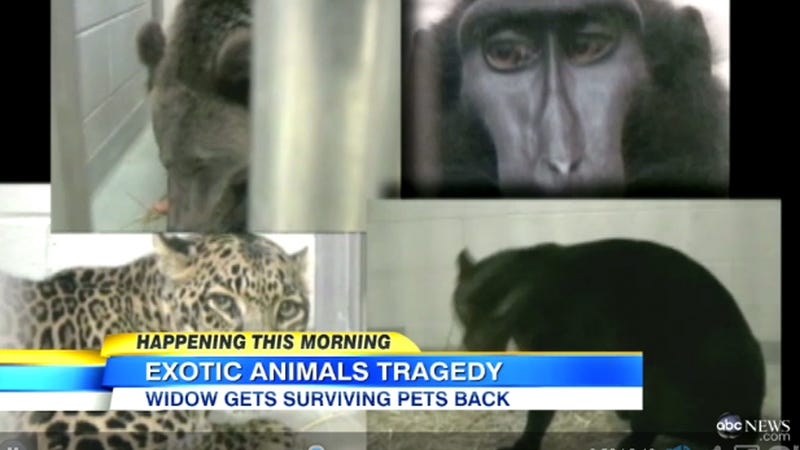 Ohio Widow Set to Reclaim Exotic Animals After Husband's October Suicide