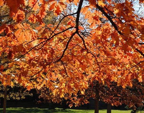 Shooting Challenge Fall Leaves Gallery 2