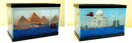 How to make a photo aquarium