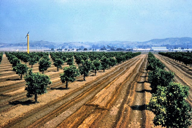 Photos of Orange County, Calif., When Oranges Actually Grew There