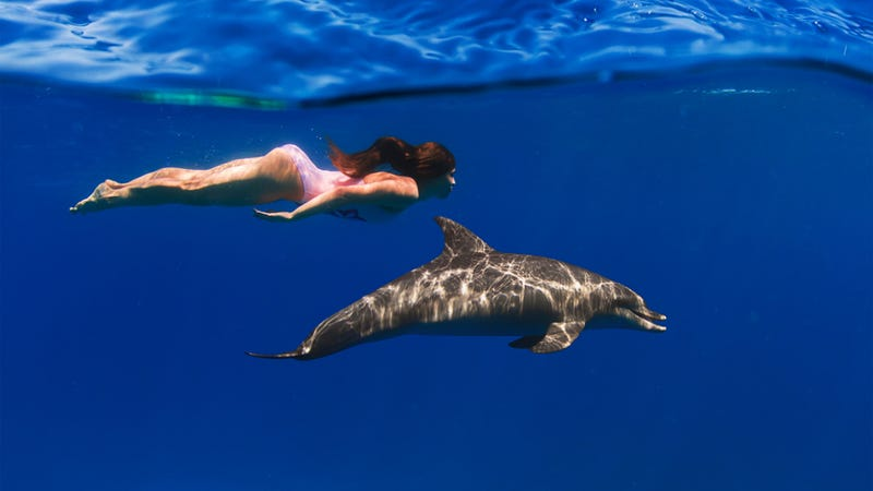 How would a dolphin and a human swimmer compare in a race?