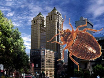 All the Places You Never Thought Would Have Bedbugs But Probably Do