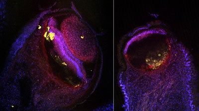 The Awesome Beauty Of Insect Brains And Single Cells