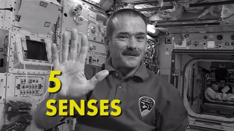 What Space Does to Each of Your Five Senses