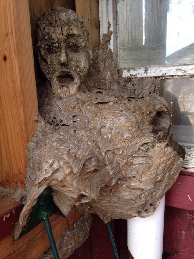 Wasp Nest Merges With Human Face To Become Nightmare Fuel