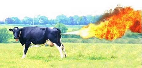Scientists Discover How to Neutralize Cow Farts; Your Farts Next, God Willing