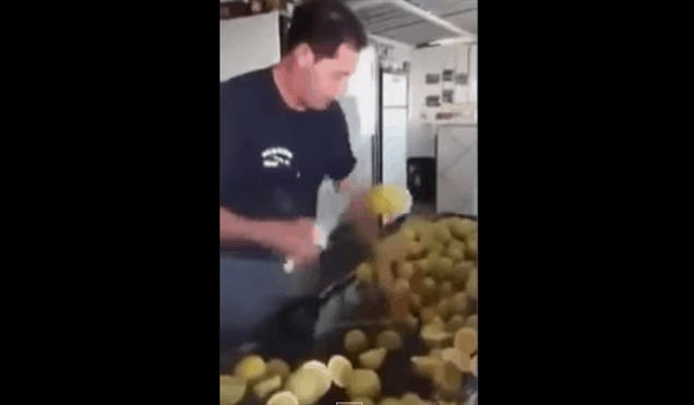 Real-Life Fruit Ninja Is Very Dangerous With A Knife
