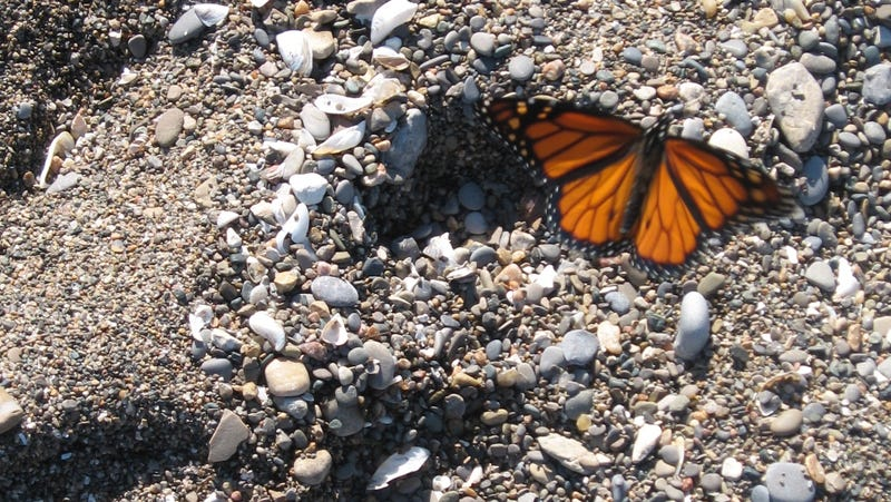 Butterflies remember a mountain that hasn't existed for millennia