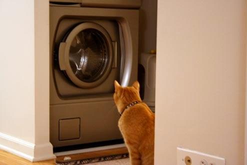 Cat Vs. Washing Machine (My Poor Cat Part II)