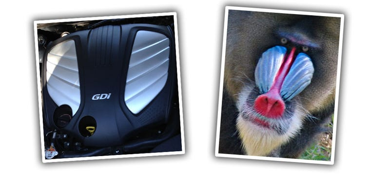 IMPORTANT: Hyundai GDi Engine Cover Sure Reminds Me Of A Mandrill