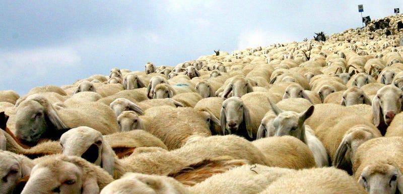 How Upvote/Downvote Sites like Reddit Breed Irrational Herd Behavior
