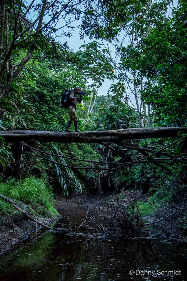 Ghost Monkeys Foretell Rainforest Destruction (Yes, Really)