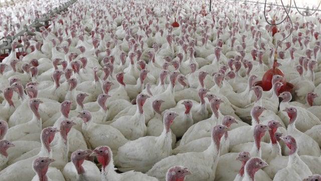 Can We Avoid an Antibiotic Apocalypse?